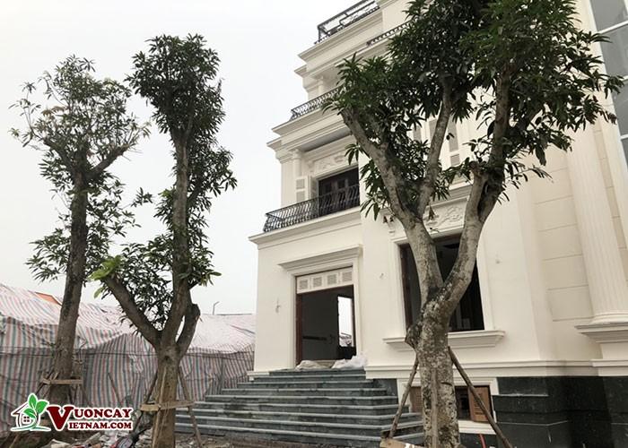 Vườn Cây Việt Nam