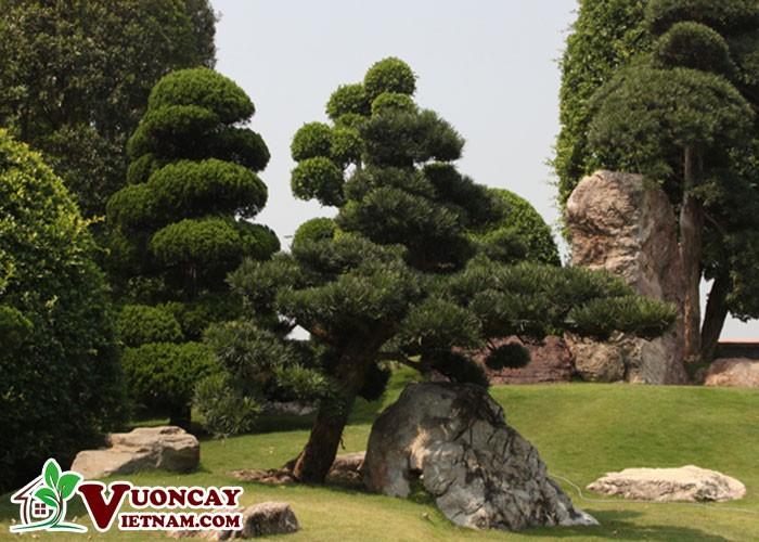 Ưu Đặc Điểm Khi Mua Bán Giống Cây Của Đơn Vị Vườn Cây Việt Nam