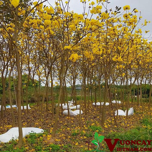 Cây Phong Linh Công Trình
