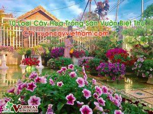 10 Loại Cây Hoa Trồng Sân Vườn Biệt Thự