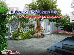 10 Loại Cây Trồng Phong Thủy